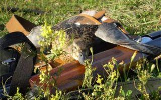 Когда начинается осенняя охота?