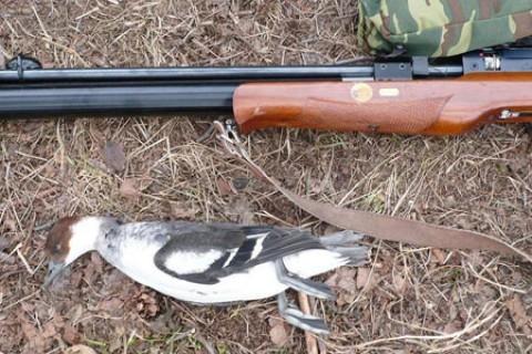 Охота с пневматикой на дичь - правила, принципы, особенности